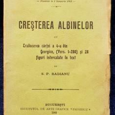 CRESTEREA ALBINELOR de S. P. RADIANU - BUCURESTI, 1904