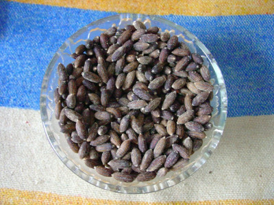 Seminte de Salcie alba (salix alba) (15 seminte) este cultivat si ca Bonsai foto