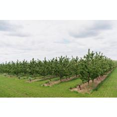 Kit irigare livadă pomi fructiferi (irigare pe pământ)