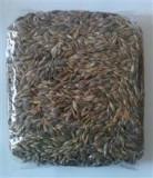 Grau Ancestral (Triticum Diccocum) pentru Iarba de Grau Bio Obio 500gr Cod: 6426333000816