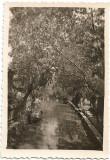 C690 2 fotografii barca pe canal si barza in cuib la Valcov 1939 Basarabia