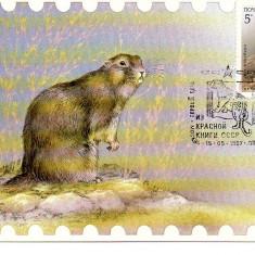 URSS 1987 CM, Fauna Hargiog, Maxime