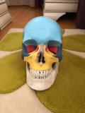Craniu Medicina
