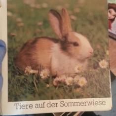 Tiere auf der Sommerwiese – Eva Spaeth