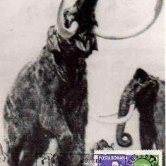 Romania 1982, CM, Fauna, Mamut, Maxime