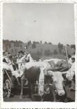 C833 Nedeie Tacasele Avram Iancu tarani port popular car boi Romania Arad