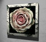 Tablou decorativ pe panza Majestic, 257MJS1315, 45 x 45 cm, Multicolor