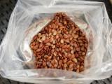 Seminte kaki Lotus, cantitate + 50 seminte