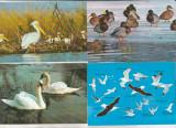 bnk cp Lot 15 carti postale fauna - pasari - necirculate