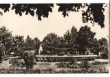 "CPIB 16886 CARTE POSTALA - TECUCI. PARCUL ""7 NOIEMBRIE"", Necirculata, Fotografie"