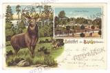3540 - BACAU, Public Garden & Deer, Litho, Romania - old postcard - used - 1906, Circulata, Printata