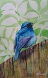 Acuarela pasare albastra (tablouri tablou picturi pictura decor)