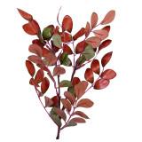 Creanga Aronia color H50 cm