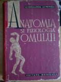 Myh 44 - ANATOMIA SI FIZIOLOGIA OMULUI - I VOICULESCU IC PETRICU - ED 1964