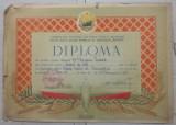 Diploma sportiva, gimnastica// Muscel 1954