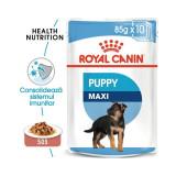 Royal Canin Wet Maxi Puppy, 1 plic x 85 g