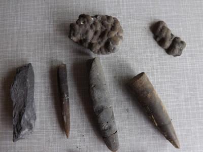 Fosile diferite cu o vechime de peste 150 000 000  ani. foto