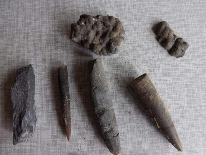 Fosile diferite cu o vechime de peste 150 000 000  ani.