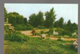 CPIB 17170 CARTE POSTALA - IASI. GRADINA BOTANICA, BAZIN CU PLANTE ACVATICE, Necirculata, Fotografie