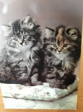 "Set 4 carti postale necirculate cu pisici, vechi, colectia ""La Rose"" Paris, Necirculata, Fotografie, Franta"