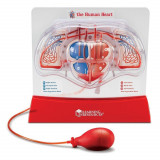 Sablon inima - Pomparea sangelui PlayLearn Toys, Learning Resources