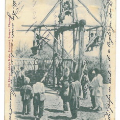1436 - CRAIOVA, Balci, ETHNICS, Romania, Litho - old postcard - used - 1900, Circulata, Printata