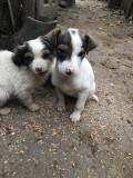 Catei spre adoptie