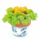 Cumpara ieftin Aranjament cu licheni naturali stabilizati, 11x14 cm