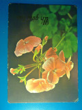"Carte Postala - Romania - Muscate 1976 ""CP156"""