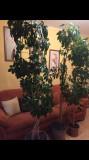 Casa și grădina, Plant