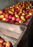 Mere idared si florina, Farmer Brand