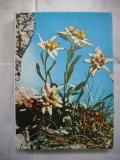 Cutie de bomboane Floare de colt-Cibo Brasov