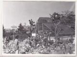 bnk foto - Cluj - Gradina botanica - anii `70