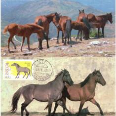 Portugalia 1987, Fauna, Cai, Maxime