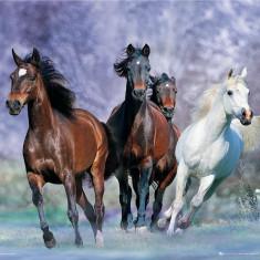 ferme de cai in germania