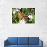 Tablou Canvas, Fluturele multicolor pe zambila alba - 60 x 90 cm