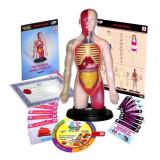 Kit educational Miniland mulaj corpul uman si sistemul digestiv