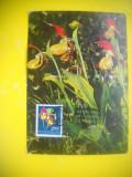 HOPCT 61525  MAXIMA  PAPUCUL DOAMNEI/ CYPRIMEDIUM CALCEOLUS L -FLORA / FLORI, Necirculata, Printata