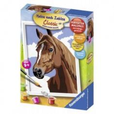 Pictura pe numere cai