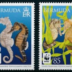 BERMUDA 2010 WWF CALUTI DE MARE