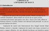 LUCRARE DE LICENTA AMF POWER-POINT - LAPTISORUL DE MATCĂ