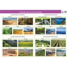 Tipuri de ecosisteme. Plansa - Florica Alexandrescu