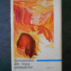 IONEL POP - INSTANTANEE DIN VIATA ANIMALELOR (1968, editie cartonata)