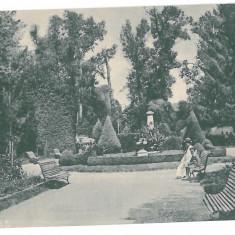 267 - TARGU-JIU, GORJ, public garden, Romania - old postcard - unused, Necirculata, Printata