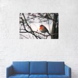 Tablou Canvas, Pasarea Macaleandru in copac - 40 x 60 cm