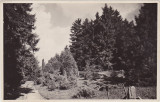 Cluj Gradina Botanica kolozsvar botanikus kert CP ilustrata necirculata ND(1940)