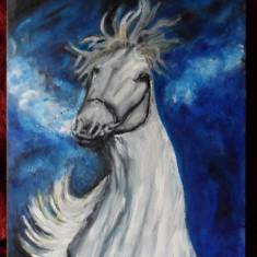 Cal alb 10-pictura ulei pe placaj