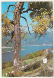 Bnk cp Bicaz - Valea Bistritei la Poiana Teiului - necirculata, Printata, Neamt