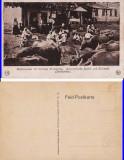 Pantelimon - Bucuresti - Tipuri