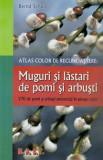 Atlas color de recunoastere: muguri si lastari de pomi si arbust/Bernd Schulz, mast